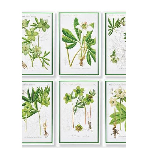 Bright and airy, this set of Hellebores framed leaf prints lights up in tones of yellow and green. A perfect complement to...