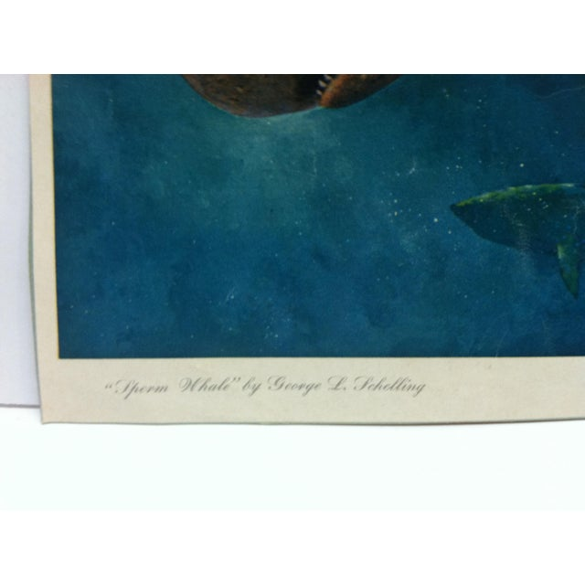 """Realism Vintage """"Sperm Whale"""" Color Animal Print by George L. Schelling Circa 1960 For Sale - Image 3 of 5"""