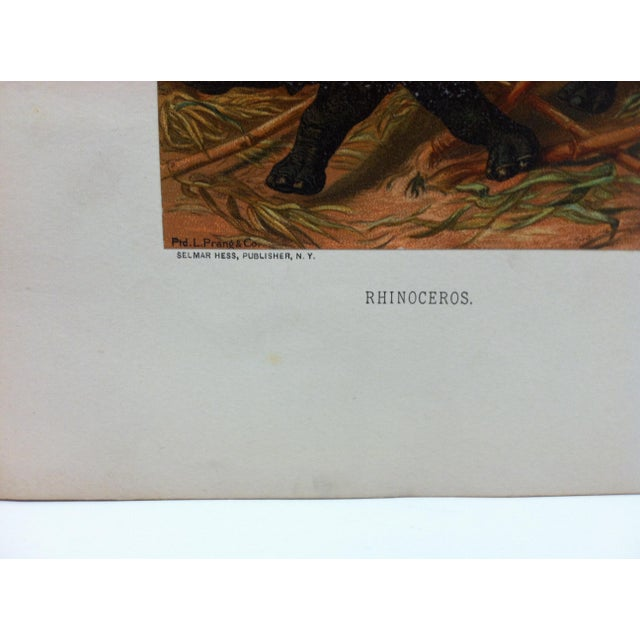 """Realism Vintage Mounted Color Animal Print, """"Rhinoceros"""" by Selmar Hess Publisher For Sale - Image 3 of 5"""