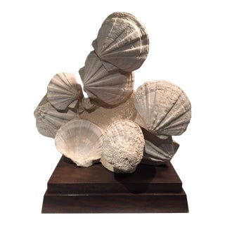 Large Mounted Prehistoric Pecten Fossil Specimen from the Carboniferous Period For Sale