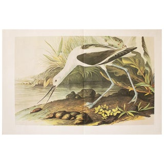 1966 Cottage Print of American Avocet For Sale