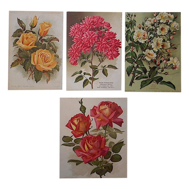 Antique Botanical Lithographs Roses - Set of 4 For Sale