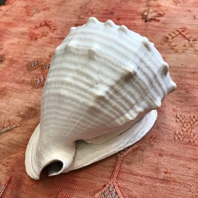 Queen Helmet Conch Seashell - Image 6 of 9