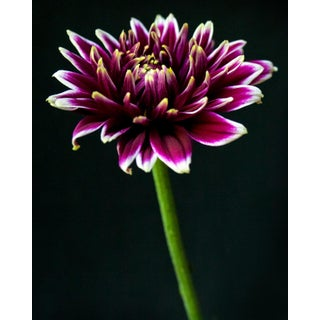 Contemporary Photograph, Botanical 43 For Sale
