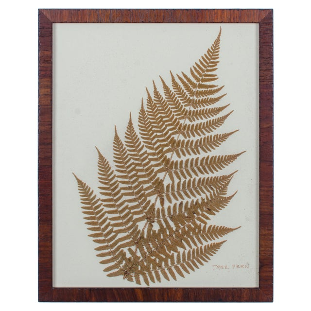 Framed Pressed Botanical Tree Fern For Sale - Image 4 of 4