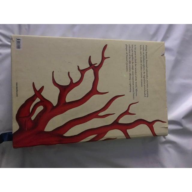Taschen 2001 Jumbo Cabinet of Natural Curiosities Book by Albertus Seba For Sale - Image 4 of 6