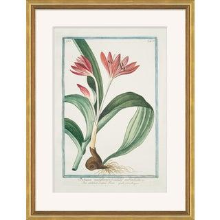 Hortus Romanus 1772-1793 XXIII Framed Art Print For Sale