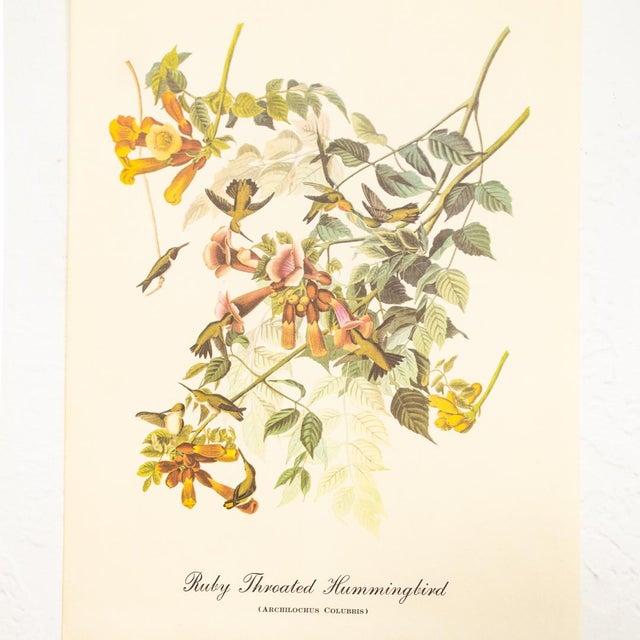 John James Audubon 1960s Audubon Bird Prints | 17 Pc Gallery Collection For Sale - Image 4 of 13