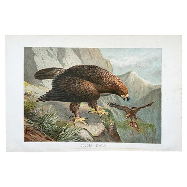 Antique chromolithograph of a Golden Eagle, an Illustration for a natural history publication, circa 1900. Light foxing on...