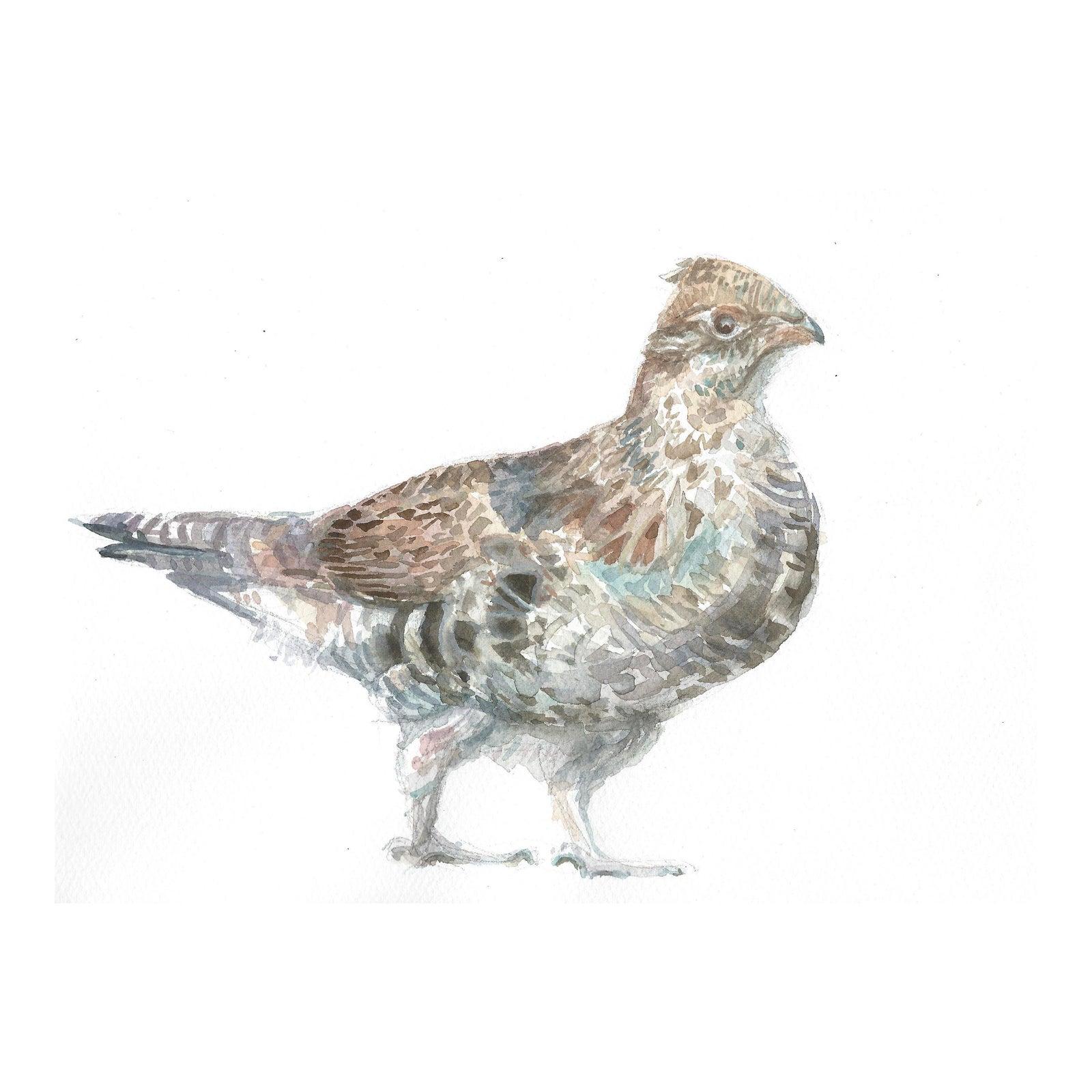 Ruffed Grouse Original Watercolor Painting Chairish