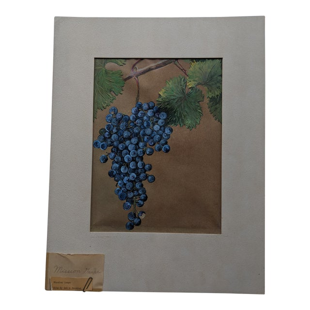Mission Grape Oil Painting For Sale