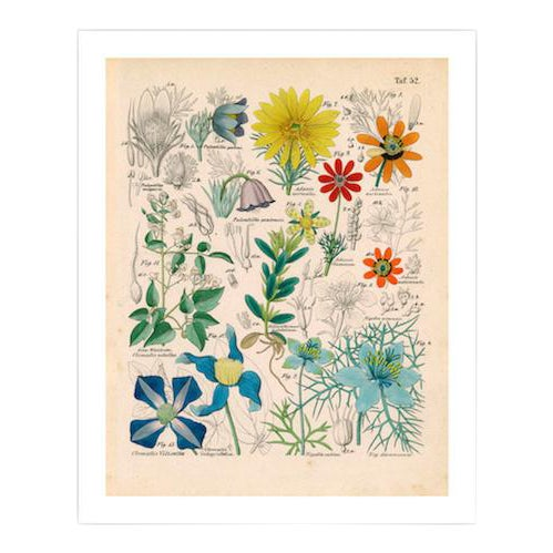 Antique 'Botanical Plate' Archival Print For Sale
