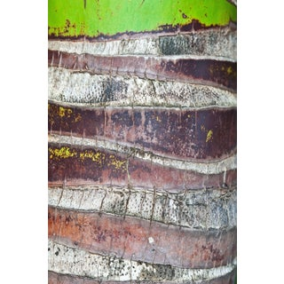 "Gaétan Caron ""Coco"" Puna Peninsula, Hawai'i, Palm Tree Photograph, 2017 2017 For Sale"