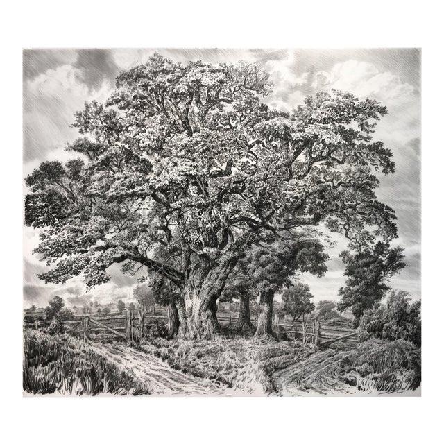 "Contemporary ""Large Oak"" Rick Shaefer Charcoal Print For Sale"