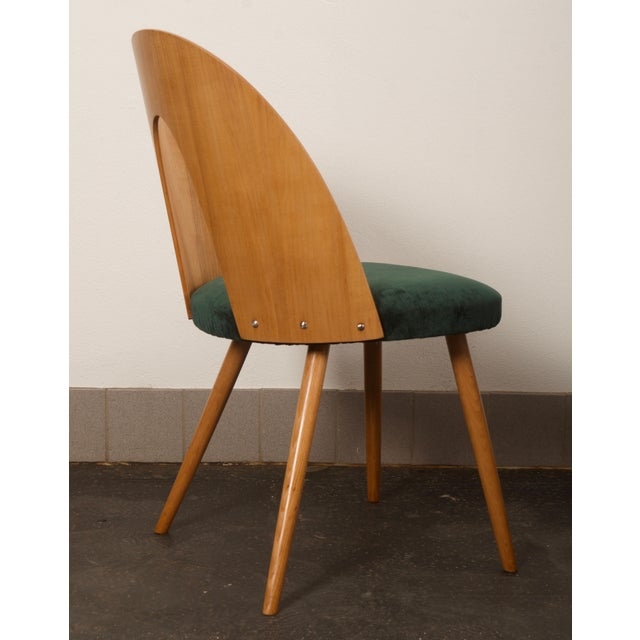 1950s Ash Dining Chairs by Antonin Suman for Tatra For Sale - Image 5 of 10