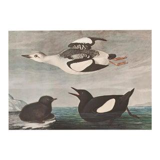 1960s Cottage Style Lithograph of Black Guillemot by John James Audubon For Sale