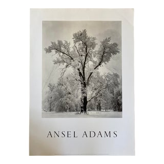 1948 Ansel Adams Oak Tree, Yosemite Poster For Sale