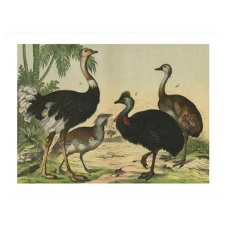 Vintage Ostrich & Friends Archival Print
