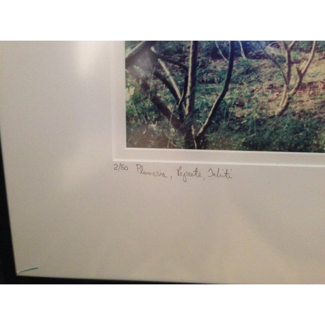 """Plumeria"" Lithograph Signed Allan Bruce Zee '97 - Image 6 of 8"