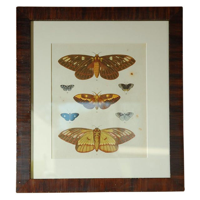 Set of eight framed Antique hand colored lithographs of butterfly studies by Pierre Cramer of Amsterdam. Printed in 1791...