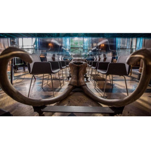 Large Woolly Mammoth Head 8ft Glass Top Table For Sale - Image 12 of 13