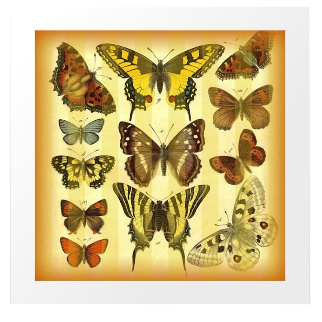 Vintage 'Butterflies on Stripes' Archival Print - Image 1 of 4