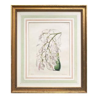Antique Botanical Lithograph of Orchids For Sale