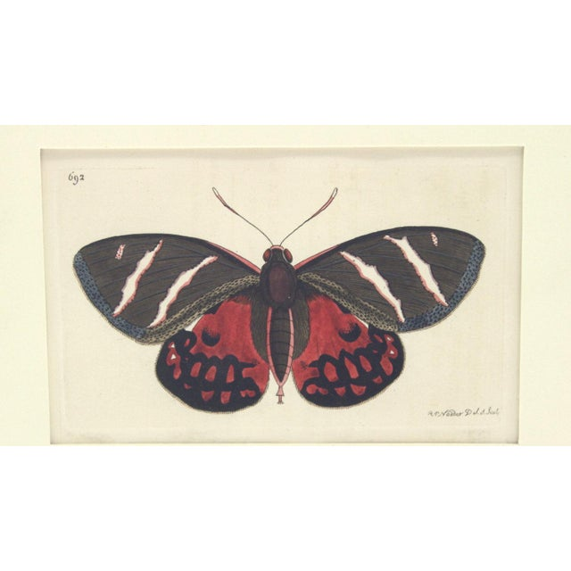 Offering a vibrant early 19th century hand colored copper plate etching by Richard Polydore Nodder, son of the famed...