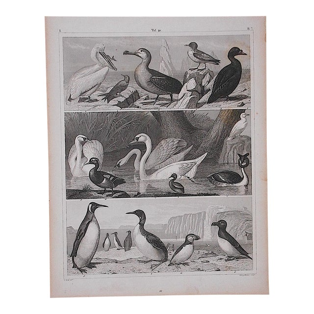 Antique Lithograph-Birds - Image 1 of 3