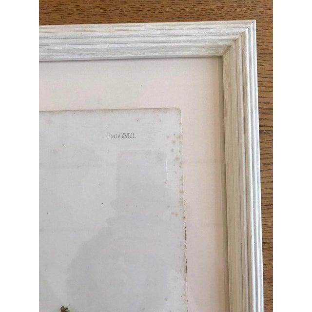 Rare process involving live specimens pressed into printing plates. Custom framing with conservation glass, circa 1855....