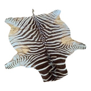 Antique Zebra Hide From Mozambique For Sale