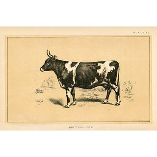 Brittany Cow, 19th C. Lithograph For Sale