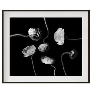 Original Signed and Numbered 'Poppies II' Contemporary Framed Photograph by Jean Karotkin For Sale