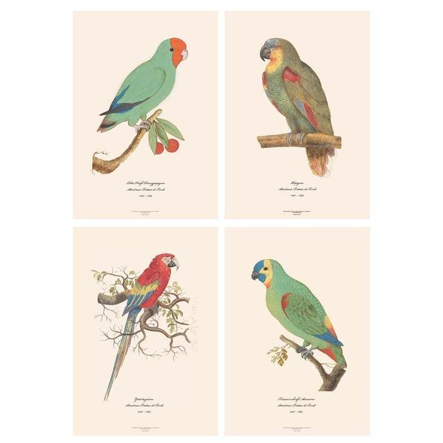 Printmaking Materials XL 1590s Contemporary Prints of Anselmus Boëtius De Boodt Parrots - Set of 4 For Sale - Image 7 of 7