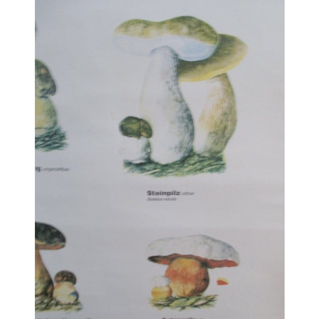 Vintage German School Science Mushrooms Chart - Image 4 of 7