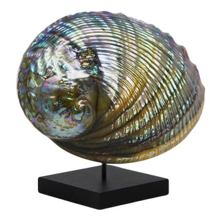 Abalone Oil Iridescent Natural Shell Sculpture For Sale