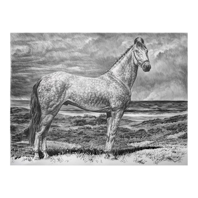 "Contemporary ""Dappled Akhal Teke"" Rick Shaefer Charcoal Print For Sale"