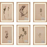 Image of Herbarium, Framed Artwork - Set Of 6 For Sale