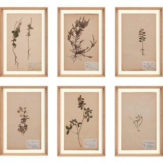Herbarium, Framed Artwork - Set Of 6 For Sale