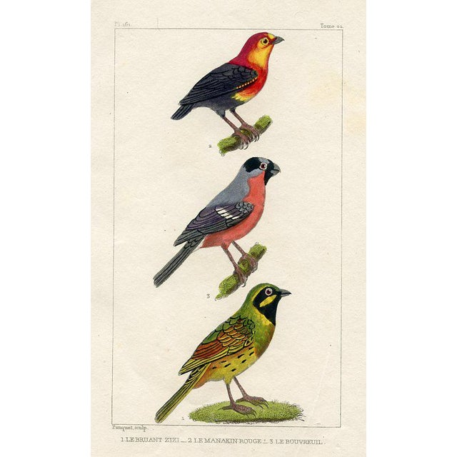 Illustration Bunting and Bullfinch, 1831 French Bird Engraving For Sale - Image 3 of 3