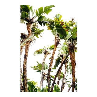 """Tropical Days"" Original Framed Photograph"