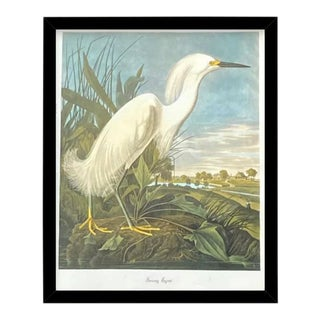 Custom Black Wood Frame of Authentic Vintage John James Audubon Snowy Egret Bird & Botanical Print For Sale