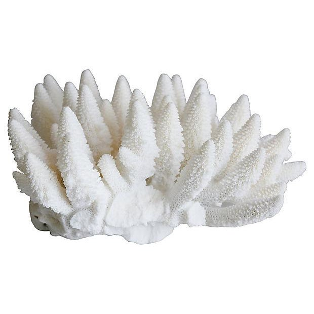 Large Natural Ocean Sea White Coral Specimen For Sale - Image 5 of 7