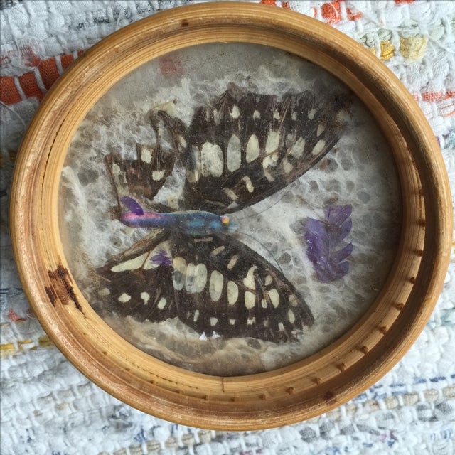 Vintage Butterfly Coasters - Set of 5 - Image 11 of 11