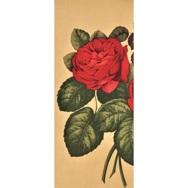 1880 Rose Botanical Chromolithograph - Image 3 of 4