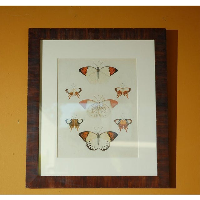 Glass Early 18th Century Antique Butterfly Prints - Set of 8 For Sale - Image 7 of 11