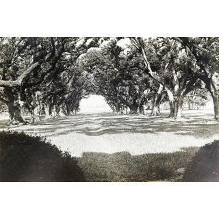 1966 Oak Alley Louisiana Photograph Preview