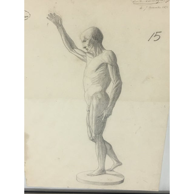 19th Century French Medical Drawing Of Front Muscular Structure