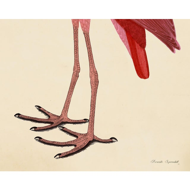 Wood Pink Birds Prints- a Pair For Sale - Image 7 of 9