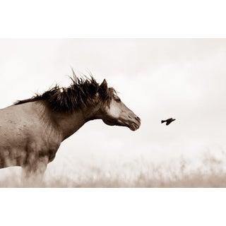 Kimerlee Curyl, 'The Flight of Honor', 2010 For Sale